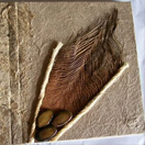 Álbuns de fotos de papel reciclado artesanal