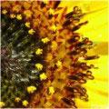 Papel Artesanal Amarelo